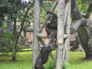 The Schmutzer Primate Centre3
