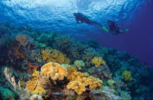 Wakatobi National Park 2