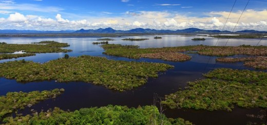 Sentarum Lake, West Kalimantan